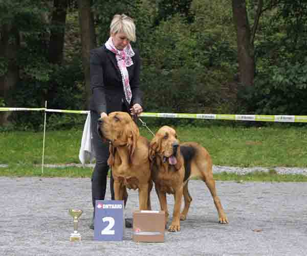 bloodhound Flessner's International Grand Ville