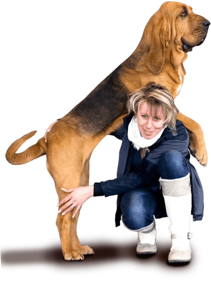 Bloodhound breeder - Arosa od Had�ho potoka